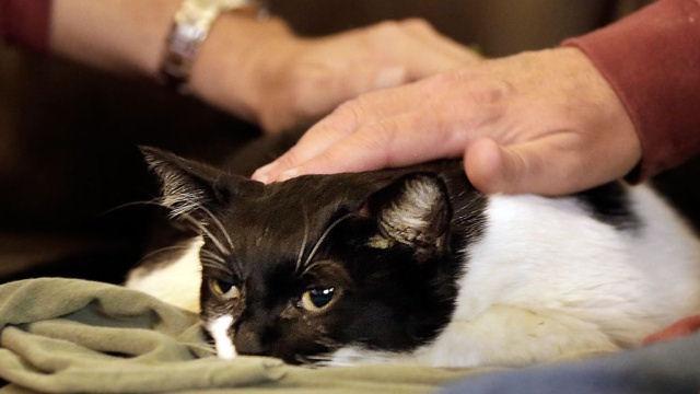 Кошки самостоятельно спаслись из горящей квартиры