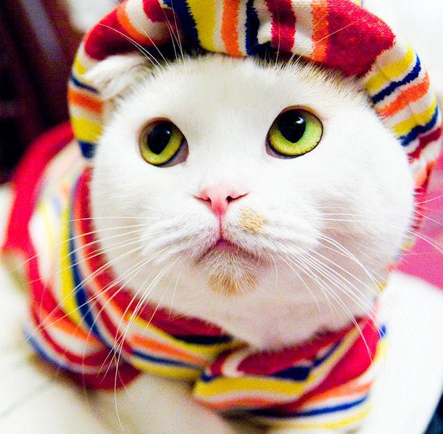 Кошки считают людей