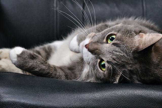 Кошки способны лечить людей и продлевать им жизнь