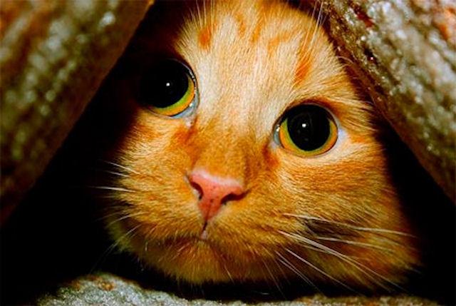 Кошки стали спасительницами своей хозяйки