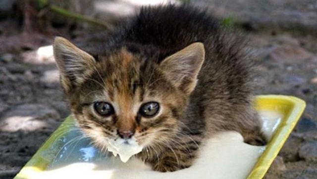 Кошки станут дегустаторами на одном из предприятий Пскова