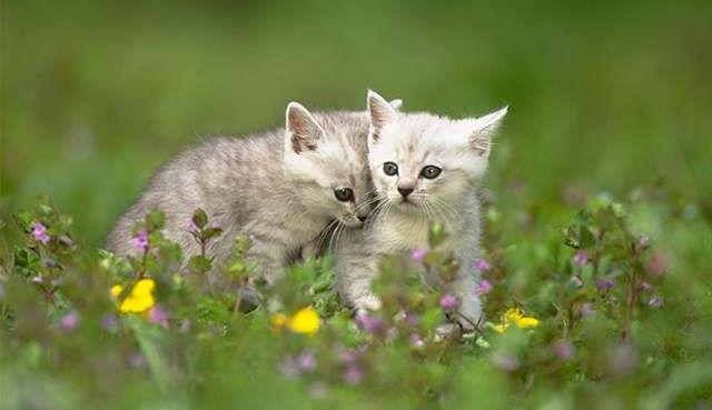 Кошки могут спровоцировать вспышку токсоплазмоза