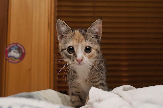 Домашние кошки могут быть разносчиками туберкулеза