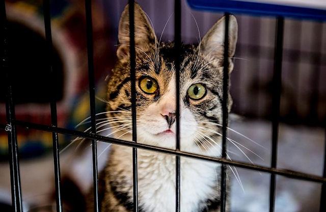 90 кошек были спасены от контрабандистов в Таиланде