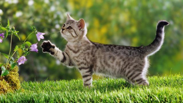 Кошки дадут ключ к созданию вакцины от СПИДа