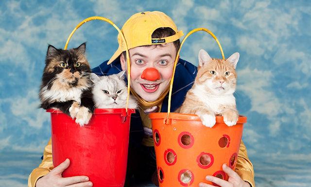 Кошки жаждут человеческого внимания
