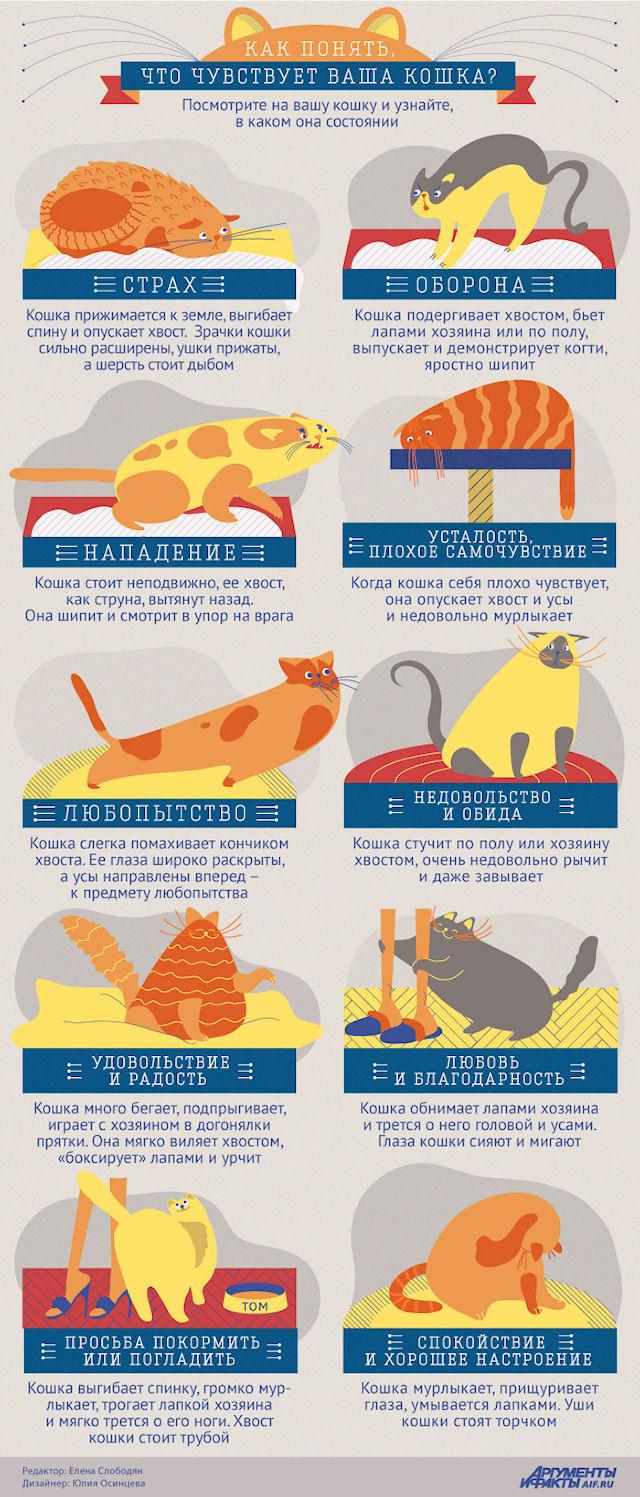 Кошкины чувства в инфографике