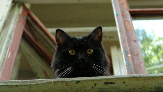 Суд посадил кошку под домашний арест, чтобы та не мешала жителям коммуналки