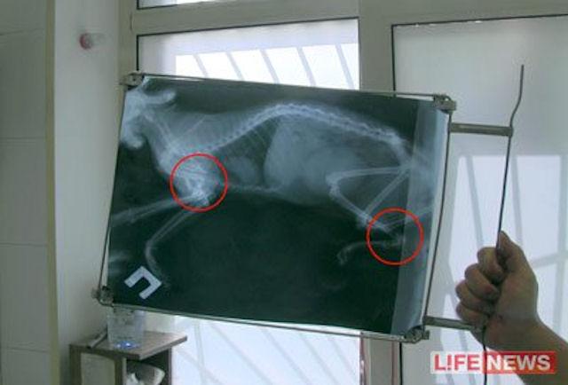 Житель Москвы выбросил кошку с 13 этажа