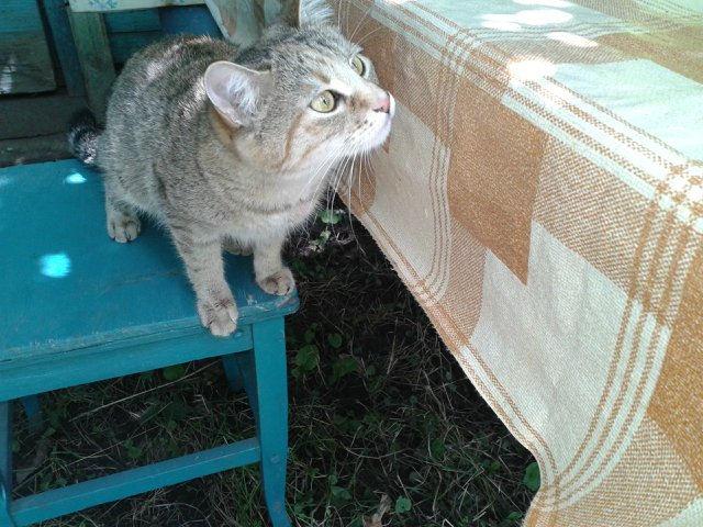 Кошку спасли путём кесарева сечения