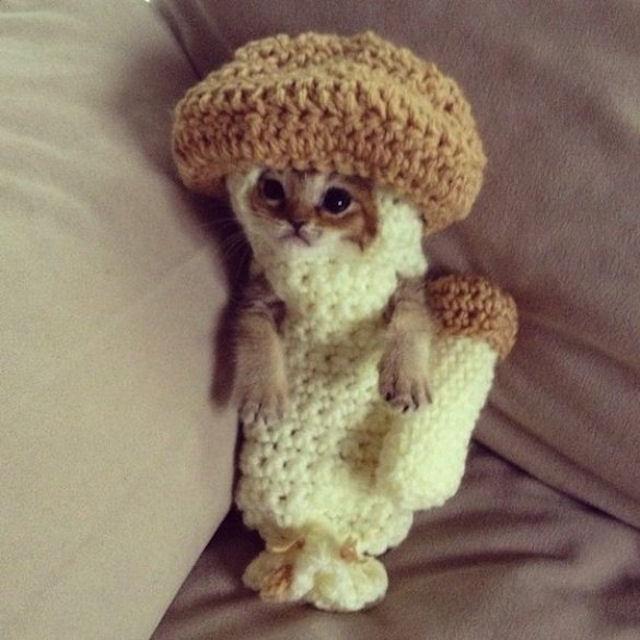 Костюм-грибочек спас котёнка от гибели