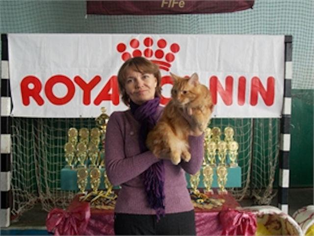 Кот Дементий удрал с пьедестала одесской выставки кошек