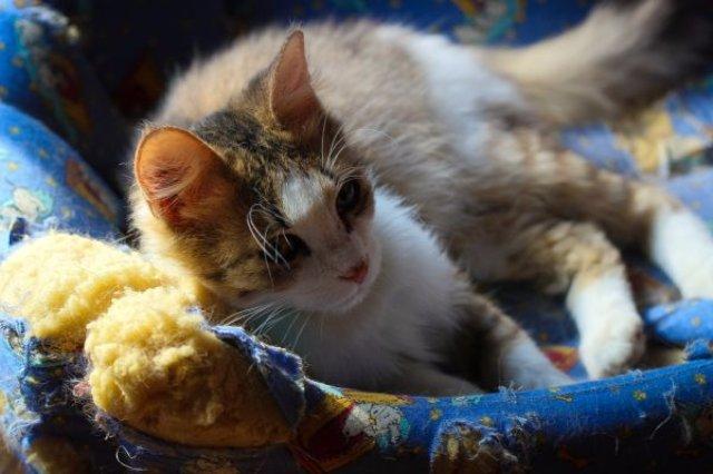 Кот доказал, что матрас является уникальным средством передвижения