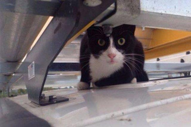 Кот-экстремал прокатился на крыше автофургона
