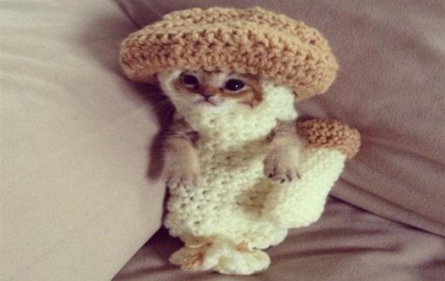 Костюм гриба спас жизнь котенку