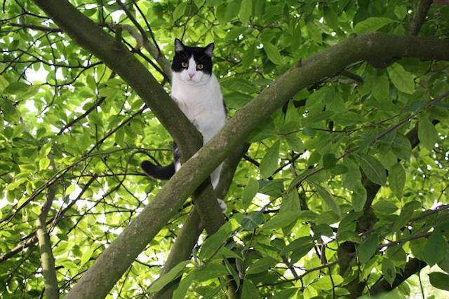 Дерево приютило кота и полицейского