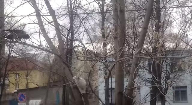 Кот и ворона устроили жёсткие разборки на дереве