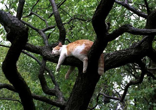Кот из Новой Зеландии истребил целый вид птиц