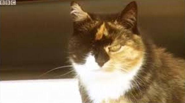 Возвращение блудного кота — после 7-месячного отсутствия кот из Калгари вернулся домой