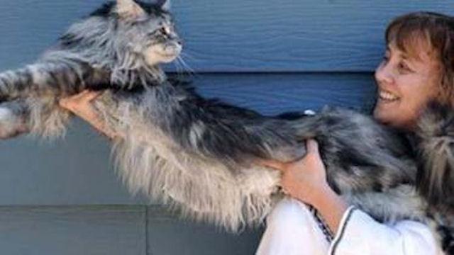 Кот из книги рекордов Гинесса