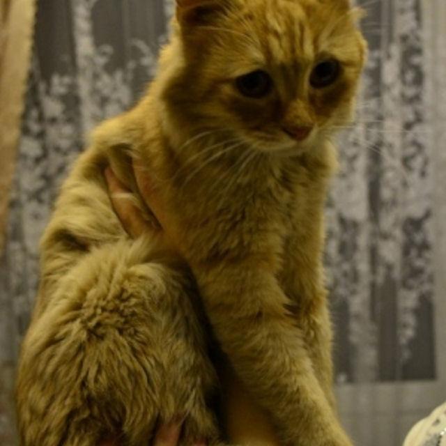 Вызволенный из вентиляции кот изменил имя и место жительства