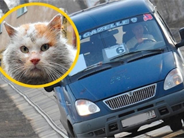 В Оренбурге живет и работает первый кот-маршрутчик