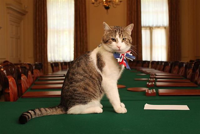 Журналисты помогли коту премьера Великобритании попасть в МИД