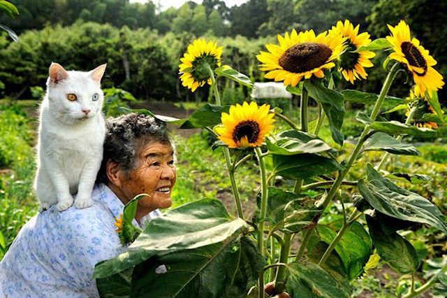 Напавшего на бабушку кота ловили спасатели
