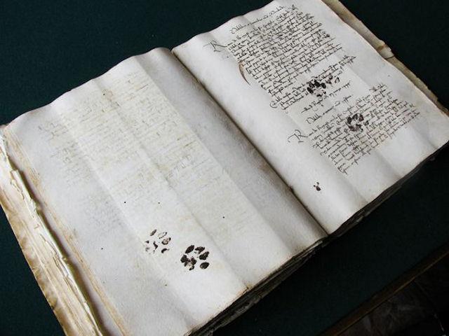 Кот наследил в… XV веке