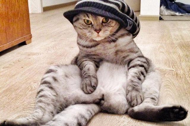 Кот Ники обожает сидеть по-человечески