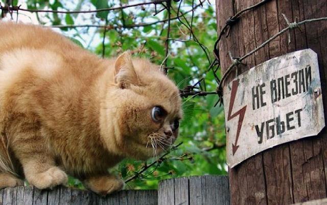 Кот оставил без света 25 тысяч симфепорольцев