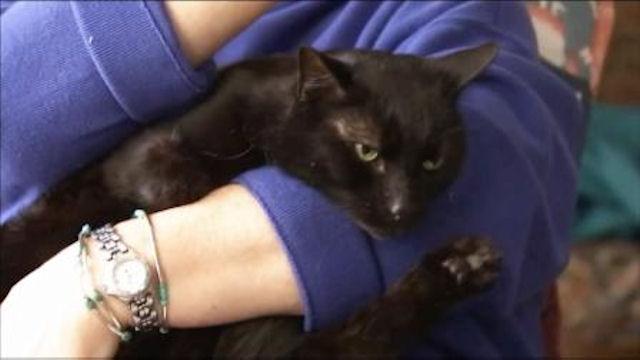 Кот, переживший стихию, вернулся домой