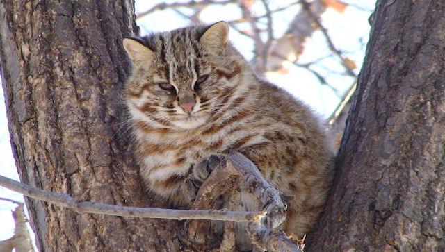 Краснодарский кот погиб под колёсами автомобиля