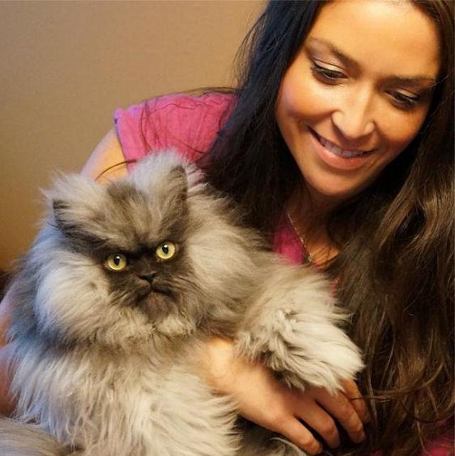 Знаменитый кот Полковник Мяу умер в США