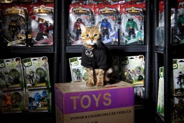 Бездомный кот получил работу охранника в магазине