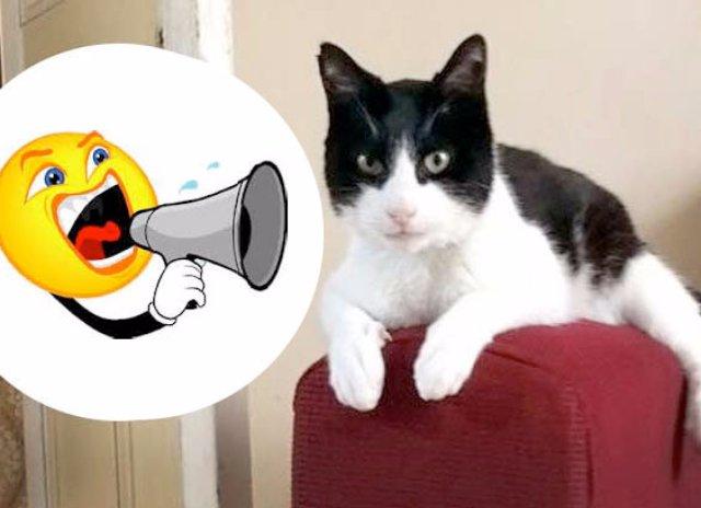 Кот попал в книгу рекордов Гиннесса за самое громкое урчание