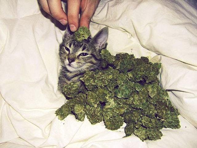 Кот преподнёс хозяйке необычный «подарок» в виде пакетика с марихуаной