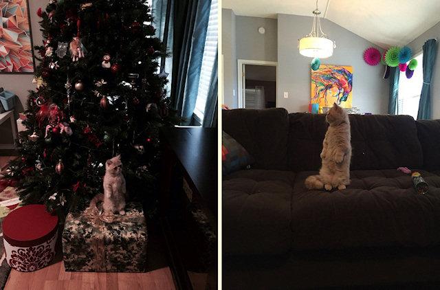 Кот прославился благодаря удивительным способностям