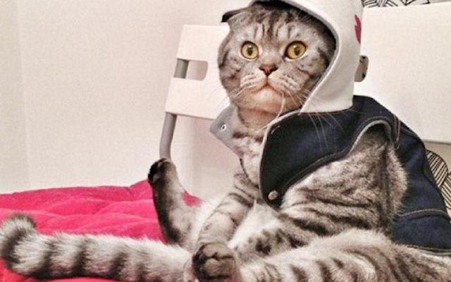 Кот содержит хозяйку