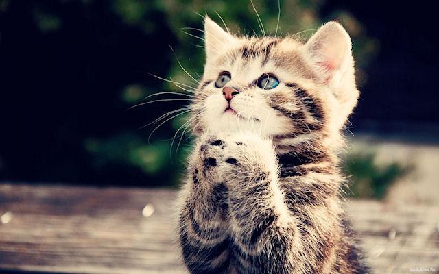 Кот стал причиной ДТП с летальным исходом