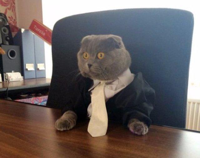 Кот стал работником интернет-компании