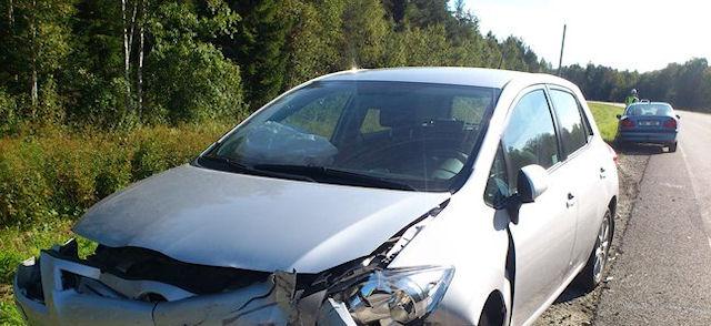 Кот стал виновником столкновения 2-х автомобилей в Эстонии