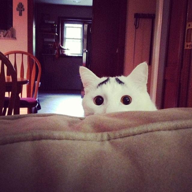 Кот удивил Интернет
