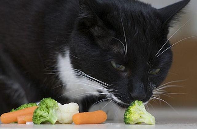 В Великобритании живёт кот-вегетарианец