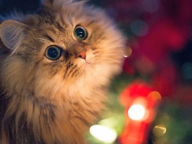 Кот вернулся домой спустя 5 лет