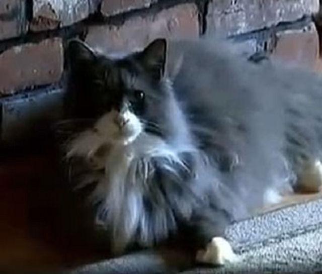 Кот вернулся домой спустя 3 года