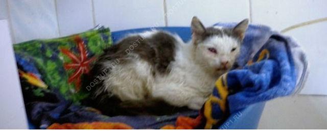 Кот выжил после попадания пули в голову