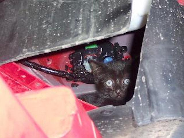 Кот выжил после попадания под бампер автомобиля