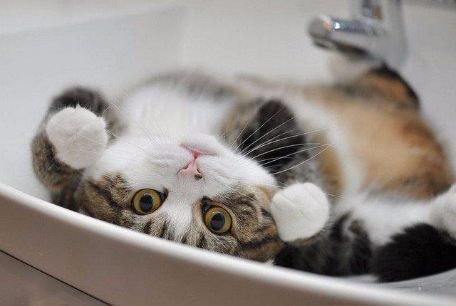 Кота живьём замуровали в ванной
