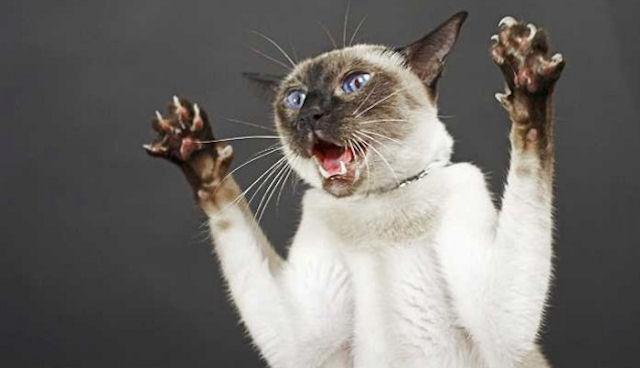 Котов лучше не злить
